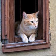 Cat, Marseilles 2004