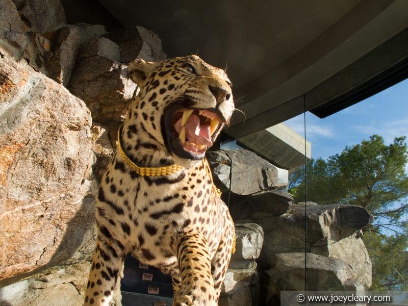 Pussycat - Palm Springs 2011