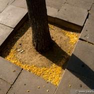 Barcelona Yellow 2011