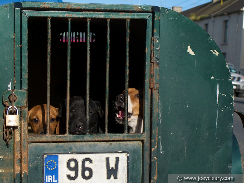 Boxed dogs, Borris-in-Ossory 2011