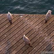 Seagulls - Barcelona 2011